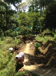 Ayurvedic spice garden